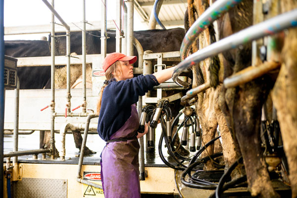 Telford Offers Free Dairy Training
